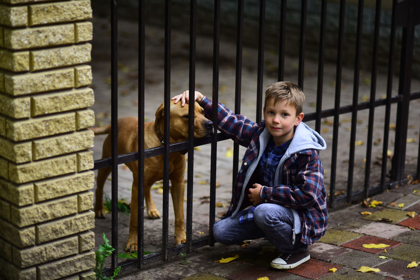 Young boy is petting pit-bull type dog through bars of a fence
