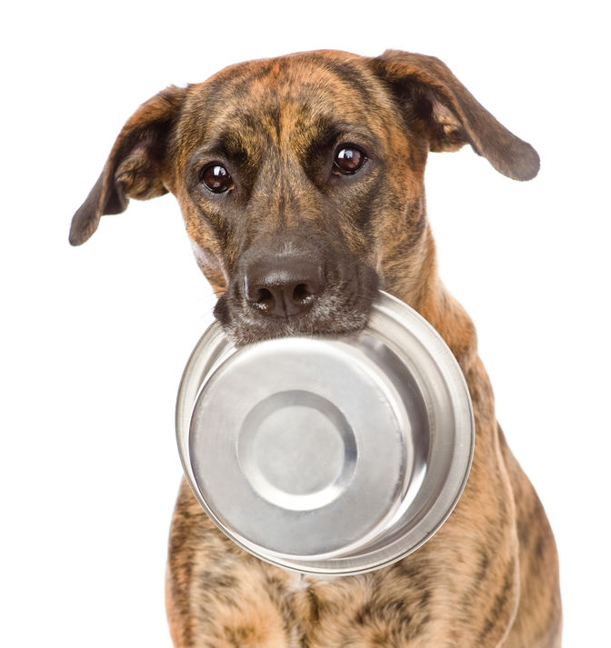 Picture of dog holding food bowl in its mouth