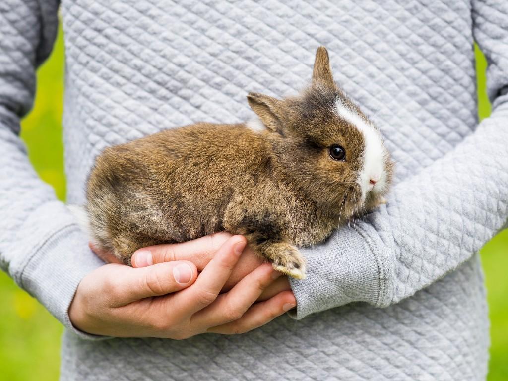 rabbit cradled in hands