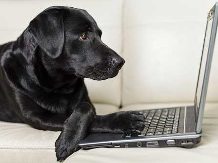 action alert dog with laptop