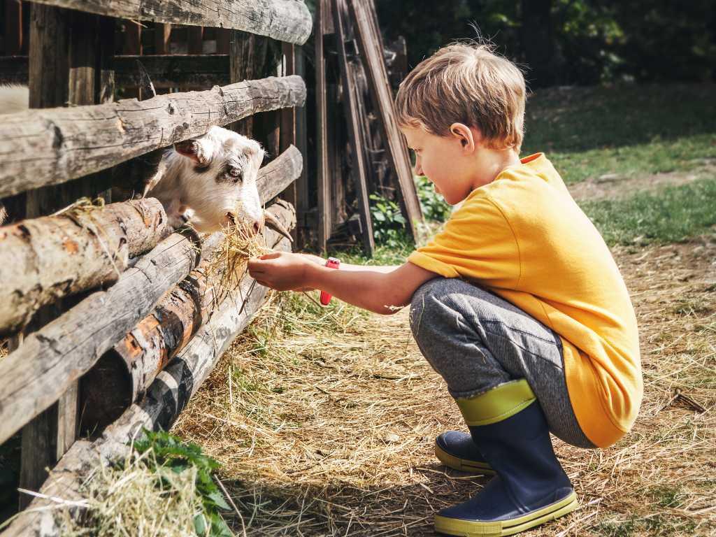 animal compassion
