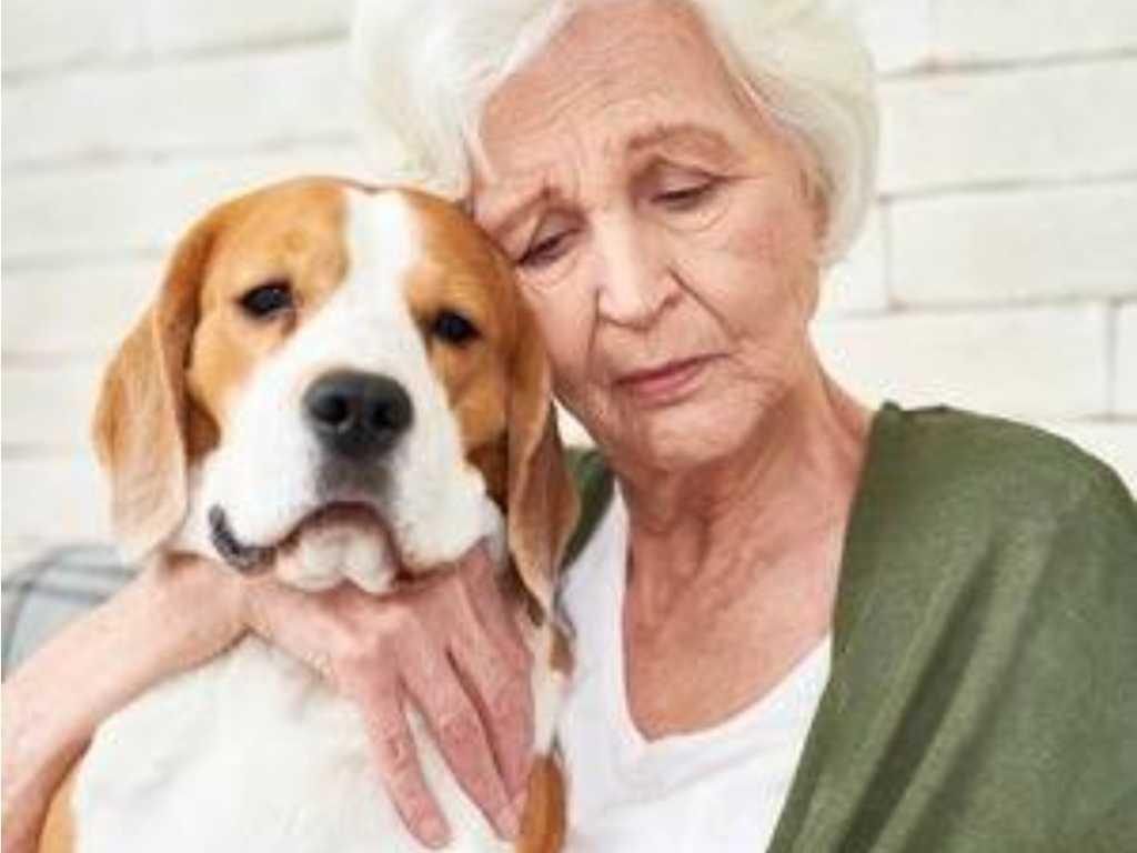 pet assistance